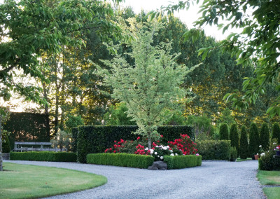Lacebark garden highlights